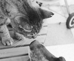 black and white, dog, and cat image