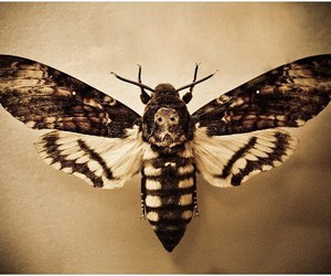 beautifully and butterfly dead head image