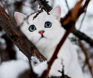 cat, white, and snow image