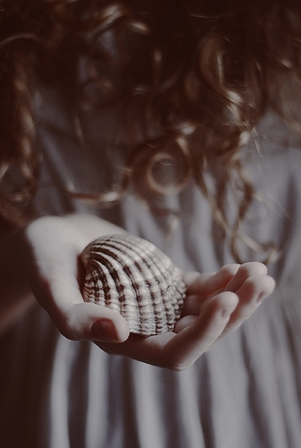 beautiful and shell image