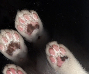 kitten, print, and paws image