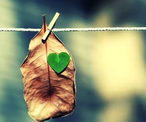 heart and leaf image