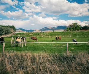 field, green, and horses image