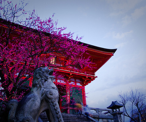 japan, beautiful, and photography image
