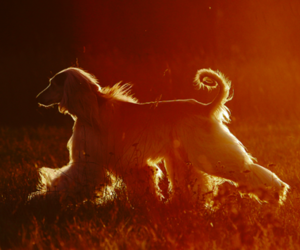 sun, dog, and summer image