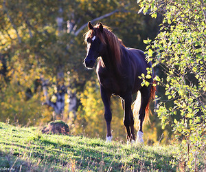 horse, nature, and photo image