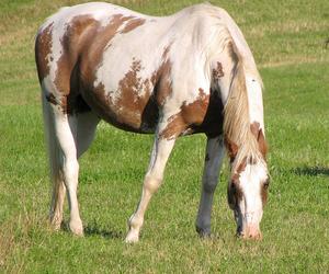 art, photo, and horse image