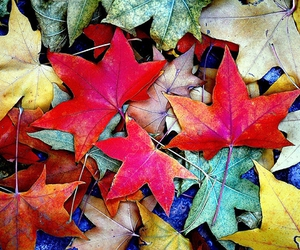 autumn and colorful image