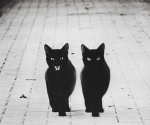 beautiful, black and white, and ghost image
