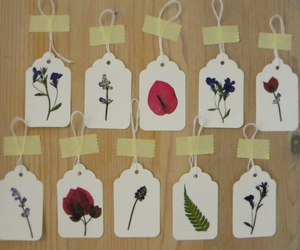 pressed flowers image