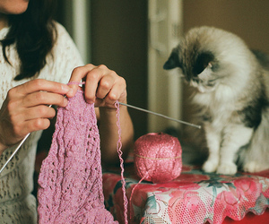 animal, kitten, and knit image