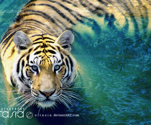 animal, nature, and water image