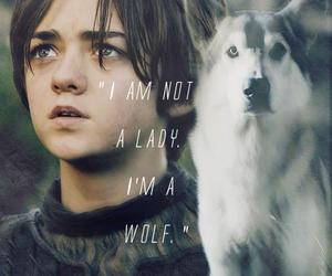 wolf, arya stark, and game of thrones image