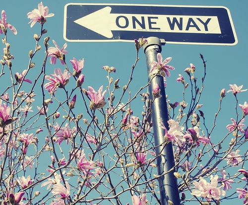 blossoms, street signs, and d200 image
