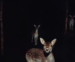 deer, animal, and night image