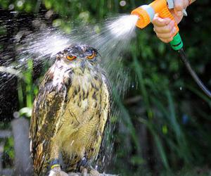 owl, funny, and water image