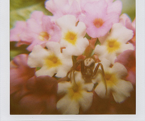 flowers, spider, and polaroid image