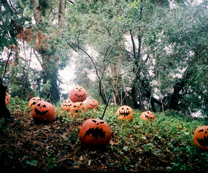 pumpkin, Halloween, and forest image