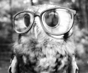 owl, glasses, and animal image
