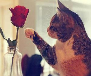cat, rose, and cute image