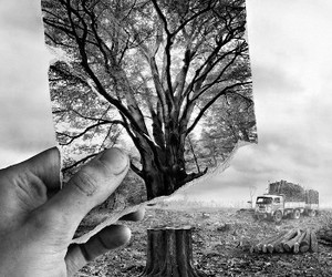tree, nature, and black and white image