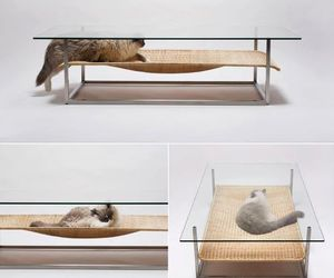 cat, funny, and table image