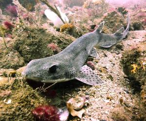 top photo of dogfish image