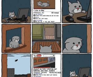 cat, youtube, and funny image