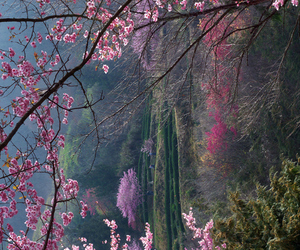 cherry, colors, and enchanted image