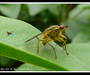 fly eye, light flies, and compound eyes image