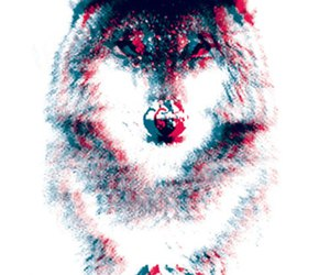 wolf and 3d image