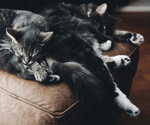 black and white, fuzzy, and cats image