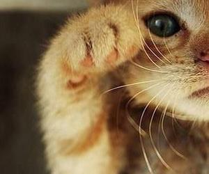 beautiful, cat, and sweet image