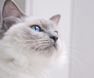 fluffy, gato, and kiki image