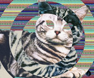 cat, drugs, and lsd image