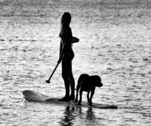 dog, summer, and surf image