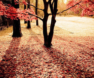 autumn, outside, and pink image
