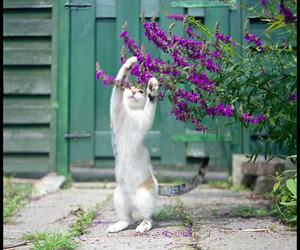 cat, fujifilm, and green image