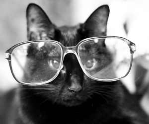 cat, black and white, and glasses image