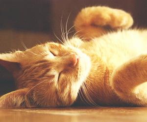 cat, cute, and djur image