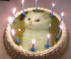 cat, cake, and aesthetic image