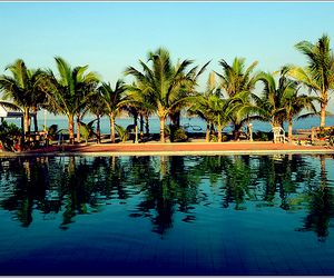 palm trees and pool image