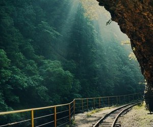 nature, train, and forest image