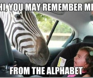 funny, zebra, and lol image
