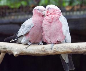 bird, pink, and animal image