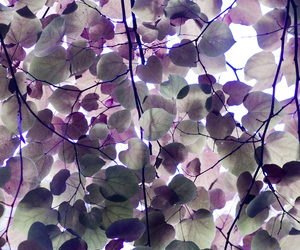 leaves, purple, and nature image