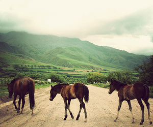 horse and mountains image