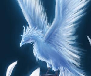ice and phoenix image
