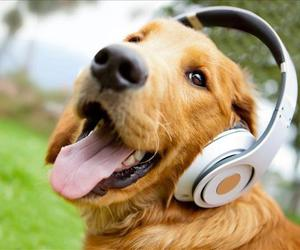 dog, listen, and dogs image