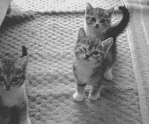 *-*, adorable, and b&w image